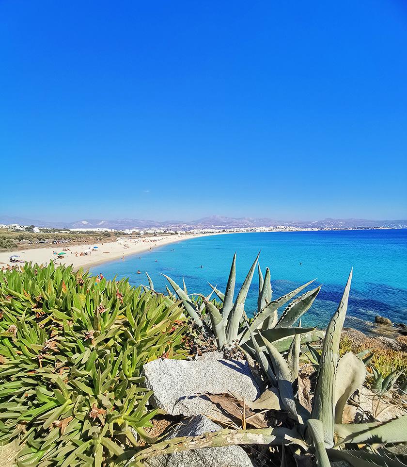Naxos Sehenswürdigkeiten - Prokopios Strand mit Kakteen im Vordergrund und kristallblauem Wasser